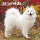Samoyeds 2020 Square Cover Image