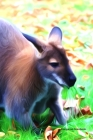 Kangaroo Notebook: A5 Lined Notepad - Journal for Women, Men, Teens and Kids. A Beautiful Gift Idea for Animal Lover Cover Image