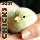 Chicks 2021 Mini Wall Calendar Cover Image