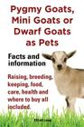 Pygmy Goats as Pets. Pygmy Goats, Mini Goats or Dwarf Goats: Facts and Information. Raising, Breeding, Keeping, Milking, Food, Care, Health and Where Cover Image