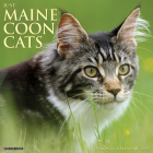 Just Maine Coon Cats 2021 Wall Calendar Cover Image
