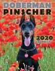 Doberman Pinscher 2020 Calendar Cover Image