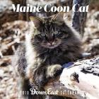 2019 Maine Coon Cat Wall Calendar Cover Image