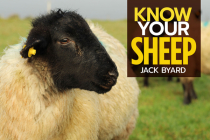 Know Your Sheep Cover Image