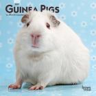Guinea Pigs 2021 Mini 7x7 Cover Image