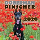 Doberman Pinscher 2020 Mini Wall Calendar Cover Image