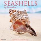 Seashells 2022 Wall Calendar Cover Image