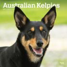 Australian Kelpies 2021 Square Btau Cover Image