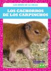 Los Cachorros de Los Carpinchos (Capybara Pups) Cover Image