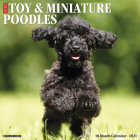 Just Toy & Miniature Poodles 2021 Wall Calendar (Dog Breed Calendar) Cover Image
