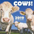 Cows! 2019 Mini Wall Calendar Cover Image