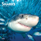 Sharks 2021 Square Cover Image