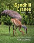 Sandhill Cranes, Family Times Cover Image