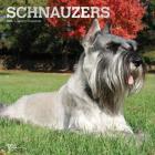 Schnauzers 2020 Square Foil Cover Image
