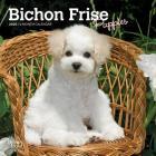 Bichon Frise Puppies 2020 Mini 7x7 Cover Image