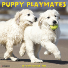 Puppy Playmates 2020 Wall Calendar Cover Image