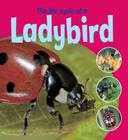 The Life Cycle of a Ladybird Cover Image