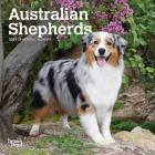 Australian Shepherds 2021 Mini 7x7 Cover Image
