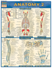 Anatomy 2 - Reference Guide (8.5 X 11): A Quickstudy Reference Tool (Quickstudy: Academic) Cover Image