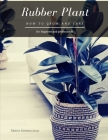 Rubber Plant: How to grow and care Cover Image