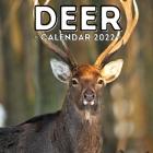 Deer Calendar 2022: 16-Month Calendar, Cute Gift Idea For Deer Lovers Women & Men Cover Image