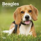 Beagles 2021 Mini 7x7 Cover Image