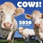 Cows! 2020 Mini Wall Calendar Cover Image