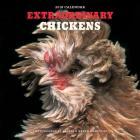 Extraordinary Chickens 2018 Wall Calendar Cover Image