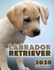 Labrador Retriever 2020 Calendar Cover Image