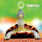 Turtles Calendar 2018: 16 Month Calendar Cover Image