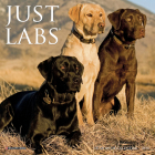 Just Labs 2020 Mini Wall Calendar (Dog Breed Calendar) Cover Image