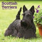 Scottish Terriers 2020 Square Cover Image