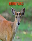 Muntjac: Amazing Facts about Muntjac Cover Image