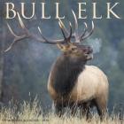 Bull Elk 2020 Wall Calendar Cover Image