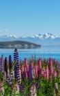 Notebook: New Zealand Tekapo Lake Sky Clouds Water Blue Cover Image