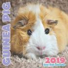 Guinea Pig 2019 Mini Wall Calendar Cover Image