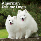 American Eskimo Dogs 2021 Square Cover Image