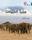 Collins Big Cat Arabic – Animal Migration: Level 13 Cover Image