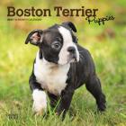 Boston Terrier Puppies 2021 Mini 7x7 Cover Image