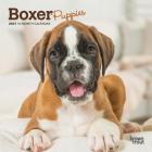 Boxer Puppies 2021 Mini 7x7 Cover Image