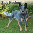 Blue Heelers 2020 Square Cover Image