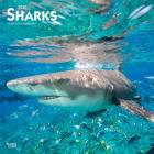 Sharks 2020 Square Cover Image