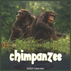 Chimpanzee 2022 Calendar: Official Chimp 2022 Calendar 16 Months Cover Image