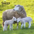Sheep 2020 Square Cover Image