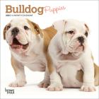 Bulldog Puppies 2021 Mini 7x7 Cover Image