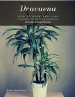 Dracaena: How to grow and care Cover Image
