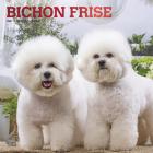Bichon Frise 2021 Square Foil Cover Image