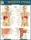 Anatomy of the Digestive System: Quickstudy Laminated Reference Guide Cover Image