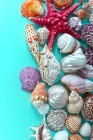 Seashells on Blue Journal: 150 Page Lined Notebook/Diary Cover Image