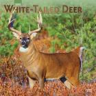 White Tailed Deer 2020 Square Foil Cover Image